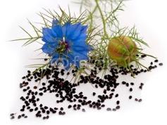 geacosmetics-planta-comino-negro