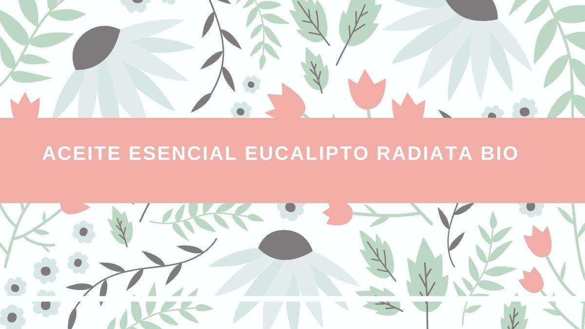 Aceite esencial de eucalipto radiata