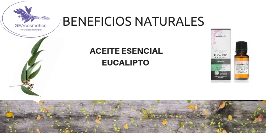 beneficio-naturales-aceite-esencial-eucalypto